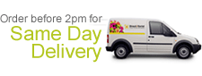 Florists Same Day Flowers Delivery in